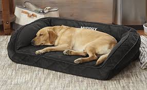 memory foam bolster dog bed orvis memory foam bolster dog bed