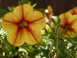 free photo flower nature garden flowers free image on