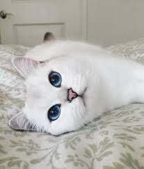 this cat has eyes brighter than my future album on imgur