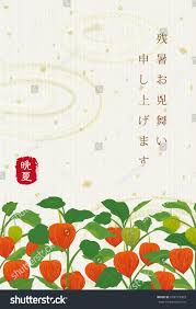 Japanese Lantern Plant Japanese Latesummer Greeting Card Chinese Lantern Stock Vector