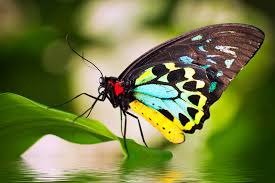 beautiful butterflies relaxing music and nature sounds youtube