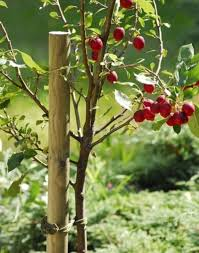 tree stakes roro timber