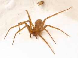 Are Spiders Attracted To Light Spiderbytes This Is A Blog About Spiders
