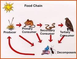 jobs food webs and ecosystems