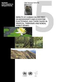 Russian Boreal Forest Disturbance Maps by Impacts Of Human Caused Fires On Biodiversity And Ecosystem