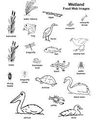 6 best images of food web worksheets 5th grade food web