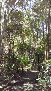 Bundaberg Botanic Gardens Fairymead House In Bundaberg Botanic Gardens Picture Of
