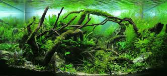 Aquascape Design Layout A Guide To Aquascaping The Planted Aquarium