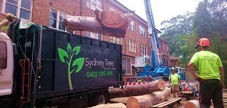 arborist tree lopping tree services sydney north shore nsw