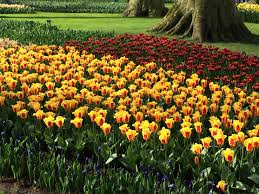 flower garden in amsterdam tulip mania and the kitchen garden u2013 apron and spoon