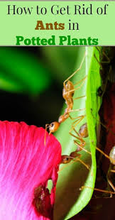 Gardening Pest Control - 22 best organic pest control for your garden images on pinterest