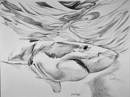 great white drawing by edward johnston