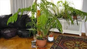 know about different types of fern for interior decoration of home