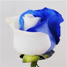 white and blue roses dyed blue and white wayne nj florist wayne nj wedding flowers