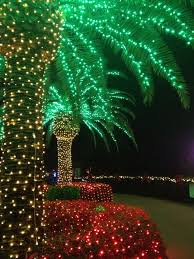 108 best palmtree images on lights