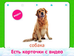 Google Home In Russian by Flashcards For Kids In Russian Android Apps On Google Play
