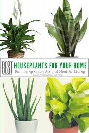 best houseplants for your home promoting clean air and healthy