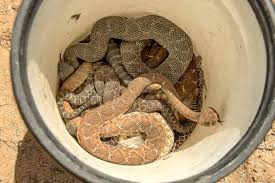 How To Find Snakes In Your Backyard Expect Snake Sightings To Jump In Orange County This Summer
