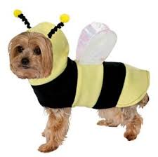 13 best dog costumes to go trick or treating with this halloween 2017