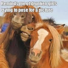 Drunk Girl Meme - animal memes drunk girls funny memes