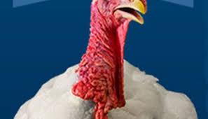 a happy thanksgiving coloradoboulevard net