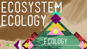 ecosystem ecology links in the chain crash course ecology 7