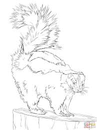 north american striped skunk coloring page free printable
