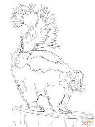 north american striped skunk coloring page free printable