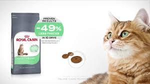 feline care nutrition digestive care youtube