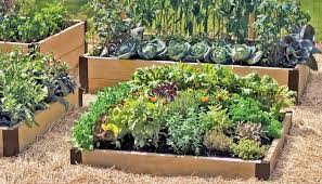 beautiful raised garden bed planting ideas raised bed vegetable