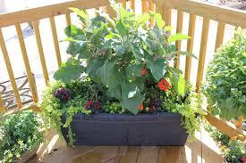 Garden Containers Ideas - container gardens 8 fantastic ideas garden lovers club