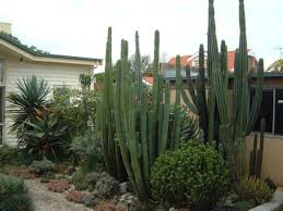 backyard cactus outdoor garden design cactus outdoor garden