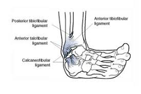 Anterior Tibiofibular Ligament Injury Ankle Sprain Kennedy Brothers Physical Therapy