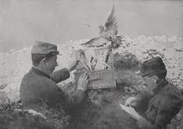 cuisine des pigeons voyageurs pigeons voyageurs colombophiles colombophilie les