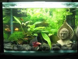 halloween fish tank background 25 best 3 gallon fish tank ideas on pinterest betta tank betta