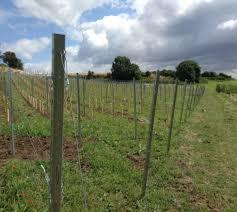 vsl vineyard solutions ltd