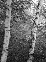 glynnis lessing trees and branches