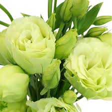 lisianthus flower lisianthus flower for june to september delivery