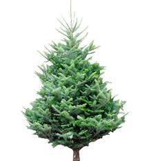 wholesale trees uk rainforest islands ferry