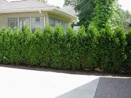 mckay s columnar trees shrubs our 7 go to plants for