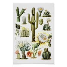 vintage cactus ring holder images Vintage cactus botanical illustration poster jpg