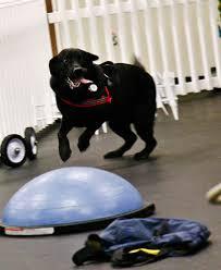 Comfort Flex Dog Harness Comfortflex Harness Review
