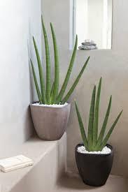 plante verte dans une chambre plante feng shui agréable feng shui couleur chambre 1 la plante