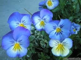beautiful flower parvin full hd pictures beautiful flower
