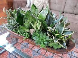 Indoor Plant Arrangements 72 Best Incredible Indoor Plants Aka Houseplants Images On