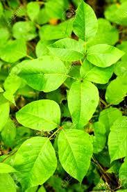60 Best Bushes Shrubs And Plants Images On Pinterest Shrubs