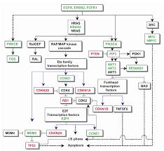 schematic representation u2013 readingrat net