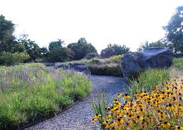 native plant the native plant garden ny ovs landscape architecture