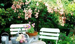 alan titchmarsh on growing roses in a garden of any size garden