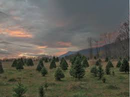 hunters christmas tree farm christmas lights decoration